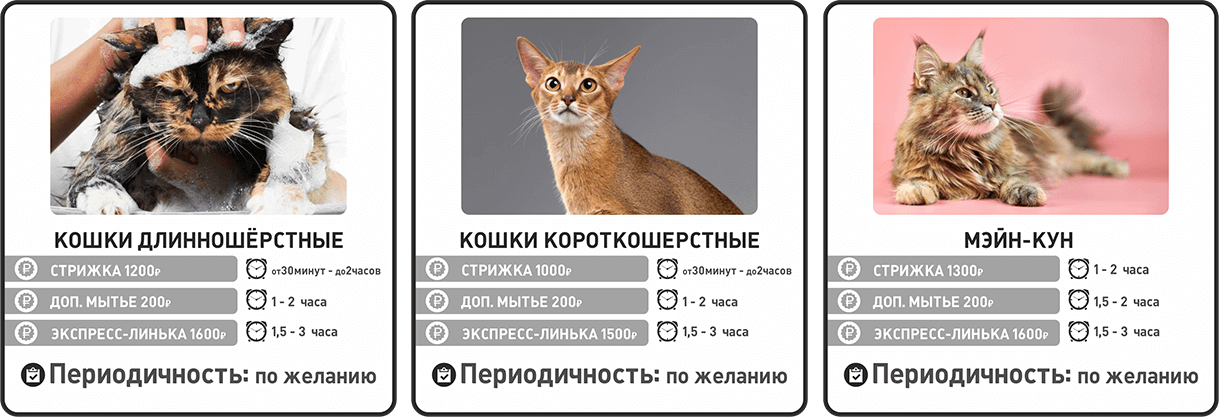 Прайс-лист на груминг кошек и грызунов