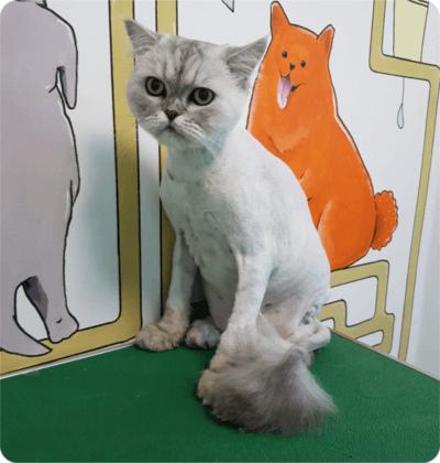 Фотографии работ груминг-салона Красный Кролик